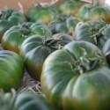 Raf Tomate natürlichen Bestäubung