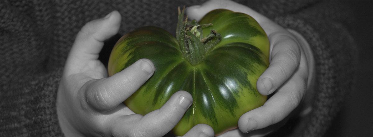 Raf tomates de la famille pepeRaf.