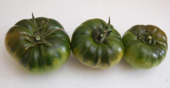 Quelle est la taille d'une tomate Raf?