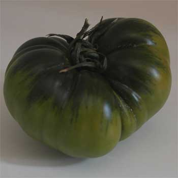 This is the shape of a Raf tomato.